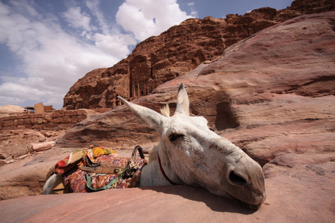 A donkey in Petra taking a moment